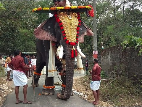 Xxx Mp4 കൊല്ലംകാരുടെ ചങ്ക് തൃക്കടവൂർ ശിവരാജു THRIKKADAVOOR SIVARAJU THE GREAT ELEPHANT 3gp Sex