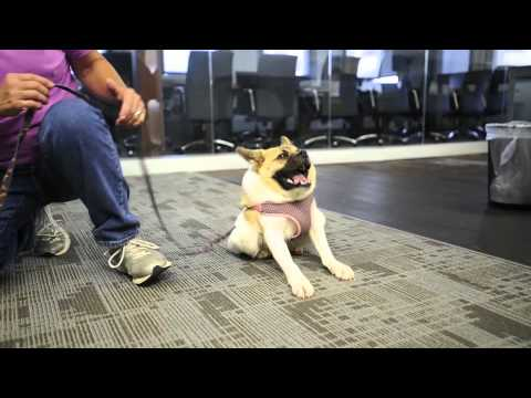 Pig the dog visits Alabama Media Group Birmingham Hub