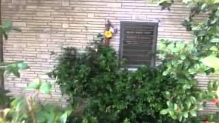 TheDailyWoo - 294 (4/21/13) Walt Disney's Grave
