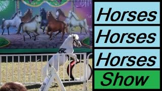 Horses Tricks Shows Videos for Kids Children Circus Funny Shots Vlog Performing Doing Animals Cool