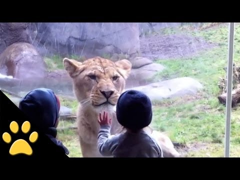 Kids At The Zoo: Compilation