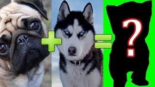 هل تعلم ما نتيجة تزاوج أشهر سلالات الكلاب فيما بينها