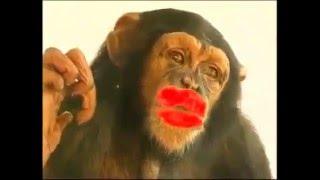 Monkey Kiss 2016