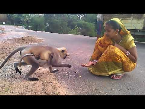Xxx Mp4 In Bandaron Ke Bhabisya Andhere Mein Hai Who Is Responsible Human Being And Where Is My Land 3gp Sex