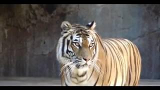 Gorkhas- Documentary on Indian Gorkhas Part 3_HIGH