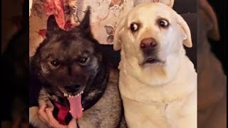 Awesome Funny Animals' Life Videos - Funniest Pets 😇