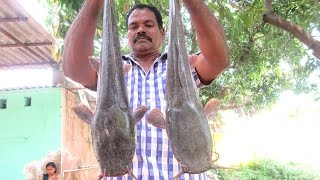 Cooking Two Big Cat Fish in My Village   Traditional Way To Cook    VILLAGE FOOD