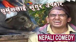 धुर्मुसलाई सुंगुर उपहार || Nepali Comedy Video || Sitaram Kattel (Dhurmus)