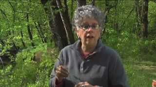 Southern Appalachian Herbs with Patricia Kyritsi Howell - Yellow Root, Toothwort and Dwarf Ginseng