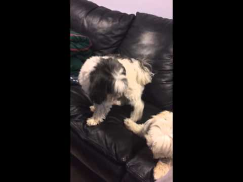 My girl dog FUCKINg my guy dog?