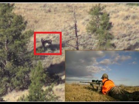 Pro Deer Hunting. 858 Yard Deer With Sniper