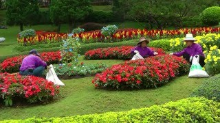 THAILAND the royal garden at Doi Tung (hd-video)