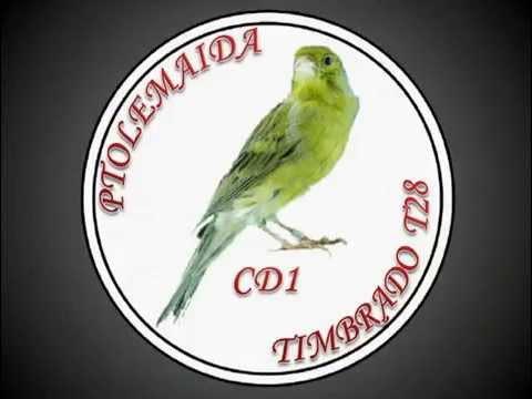 CANTO DE CANARIO TIMBRADO ESPANOL CD1
