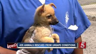 435 Dogs Rescued In Georgia, 23 Brought To Safety In Nashville