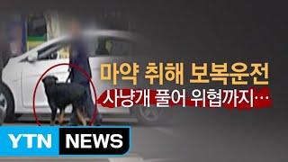 마약 취해 사냥개 풀어 보복운전 / YTN