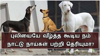 நம் நாட்டு நாய்களை பற்றி இதெல்லாம் உங்களுக்கு தெரியுமா?| Dog | BioScope