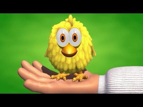 El Pollito Amarillito Canciones de la Granja 2