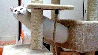 You will FALL on your BUTT from LAUGHING TOO HARD - Funny ANIMAL compilation