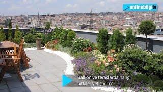 Balkon ve teraslarda hangi bitkiler yetiştirilir?