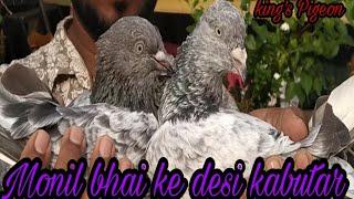 MONIL PATEL BHAI KE DESI KABUTAR GHATKOPAR EAST MUMBAI.