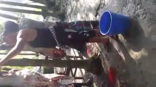 মুকসুদপুর ইউনিয়নের চেয়ারম্যান বাড়ির কুরবানির একাংশ