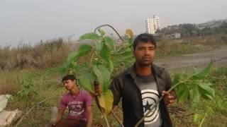 কানদেরে কানদে কন্যা নদীর কিনারায়   fan vedio