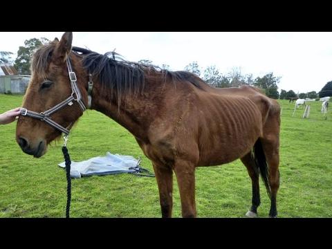 Xxx Mp4 I GOT YELLED AT FOR FEEDING A HORSE CAITO POTATOE 3gp Sex