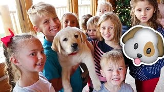 FAMILY MEETS THE NEW PUPPY! 🐶 ELLIE + JARED FAMILY SPECIAL!