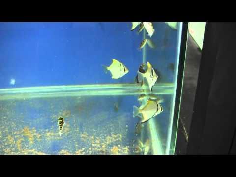 Mega loja de aquários em Curitiba