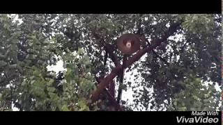 সোনার পাখি রুপার পাখি দের  মন উতলা করা কিচিরমিচির গান,শুনেই দেখুন, মনটা ভাল হয়ে যাবে কথা দিলাম