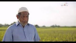 বলদের কোন শত্রু নাই ১০০% গ্যারান্টি হাঁসতে হবেই Bangla Natok Funny || Mosharraf Karim