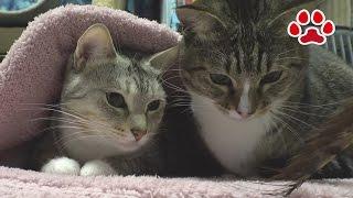 Cat's room Miaou November 29, 2016