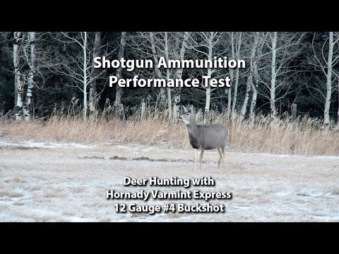 Xxx Mp4 Deer Hunting Performance Test Hornady Varmint Express 4 Buckshot 3gp Sex