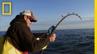 Biggest Fish of the Year | Wicked Tuna