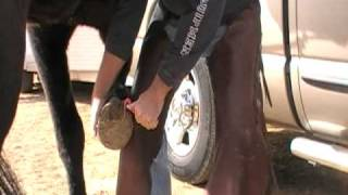 Picking a horse hoof - weight shift and softly putting hoof down - Rick Gore Horsemanship