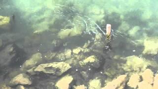 Fish In Euphrates In Deir Ezzor