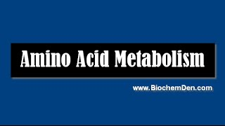 Basic Lecture on Amino Acid Metabolism