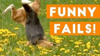 Funniest Pet Fails Compilation September 2018 | Funny Pet Videos