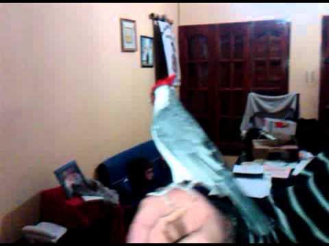 El mejor cardenal del mundo