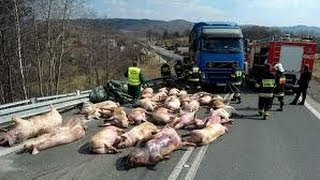 Over 50 accident truck compilation 2013