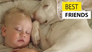Cute Babies and Dogs || JukinVideo