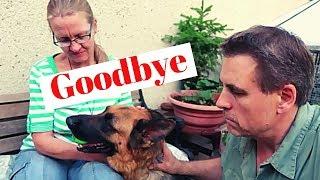 German Shepherd Is Leaving RpetsAndUs