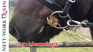 Trense Gebiss Golden Wings Stübben Steel Isländer Pferde Pferdetraining