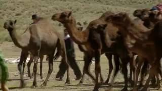 kerman documentary - ashayer karanehaye halilrod رمه (عشایر کرانه های هلیل رود مستند کرمان