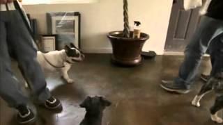 A csodálatos kutyadoki S06E01