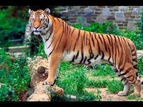 Xxx Mp4 Kolkata Alipur Zoo Video 3gp Sex
