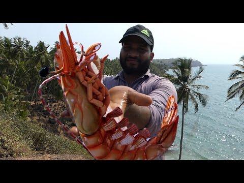 Big Shrimp Fishing | Prawns Fishing | Prawns Catching Videos
