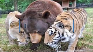 أغرب صداقات في عالم الحيوان..!!