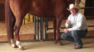 How to Remove Bot Fly Eggs from a Horse