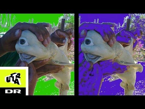 Xxx Mp4 Ubrugelig Viden Den Enøjede Albinohaj Ultras Bedste Ultra 3gp Sex